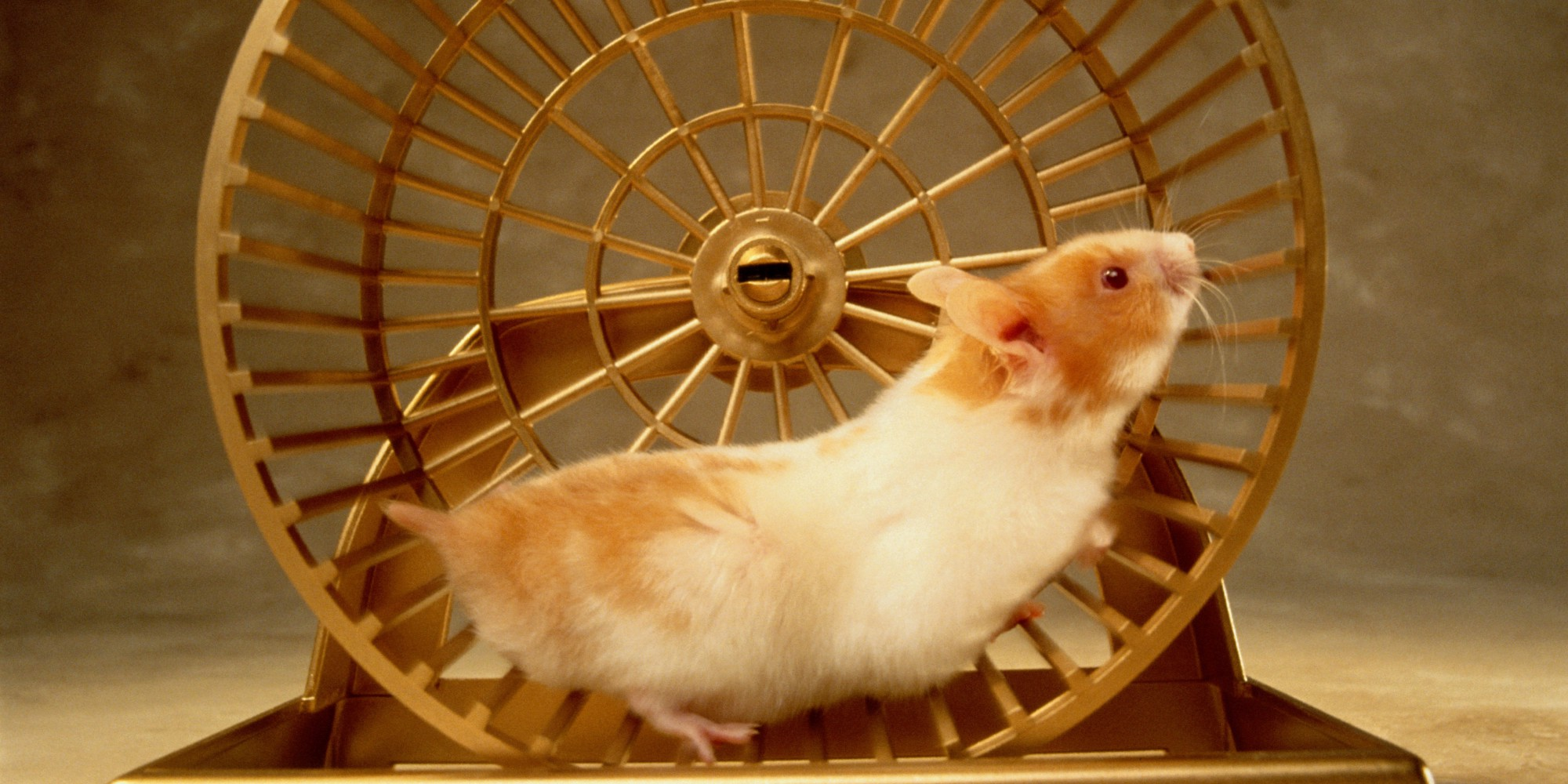 STEPPING OFF THE DEBT HAMSTER WHEEL